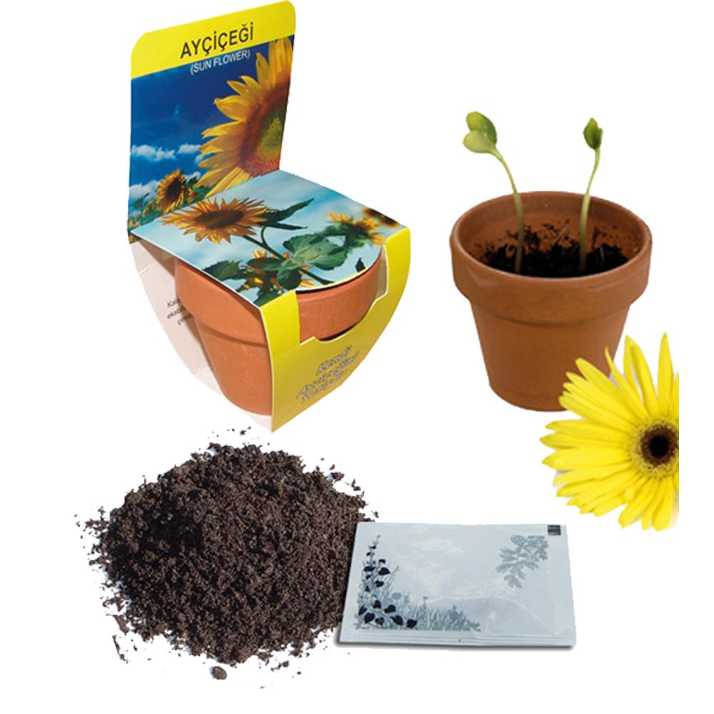 6202 Çiçek ve Ağaç Fidanları